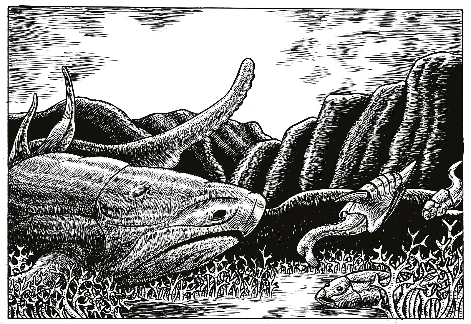 EntelognathusWEB